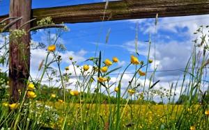 Pasture-Fence