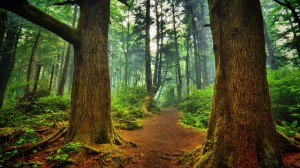 ForestPath