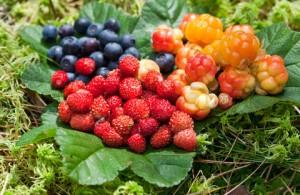Wild berries on green leaves