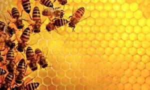 bees-Sweden-006