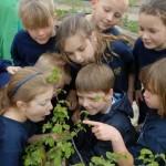 növényekaz-iskolában