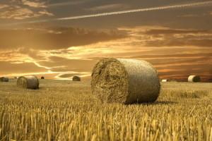 biomasa-toplotna-energija