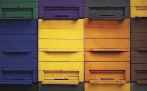 bee-house-290x180