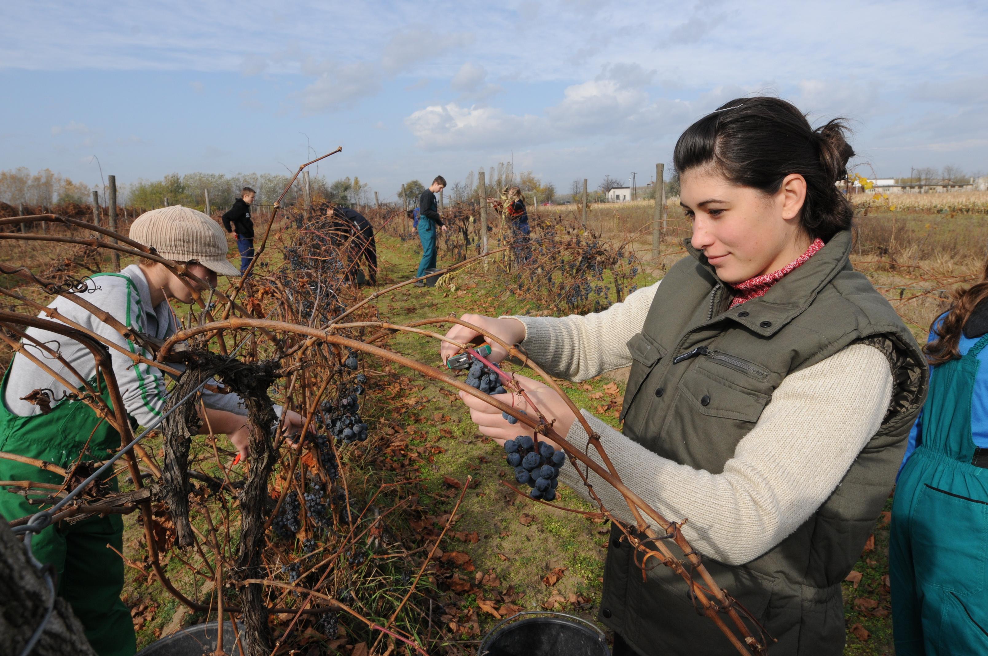 Konkurs za finansiranje intenziviranja korišćenja poljoprivrednog zemljišta kojim raspolažu srednje poljoprivredne škole ‒ putem nabavke opreme