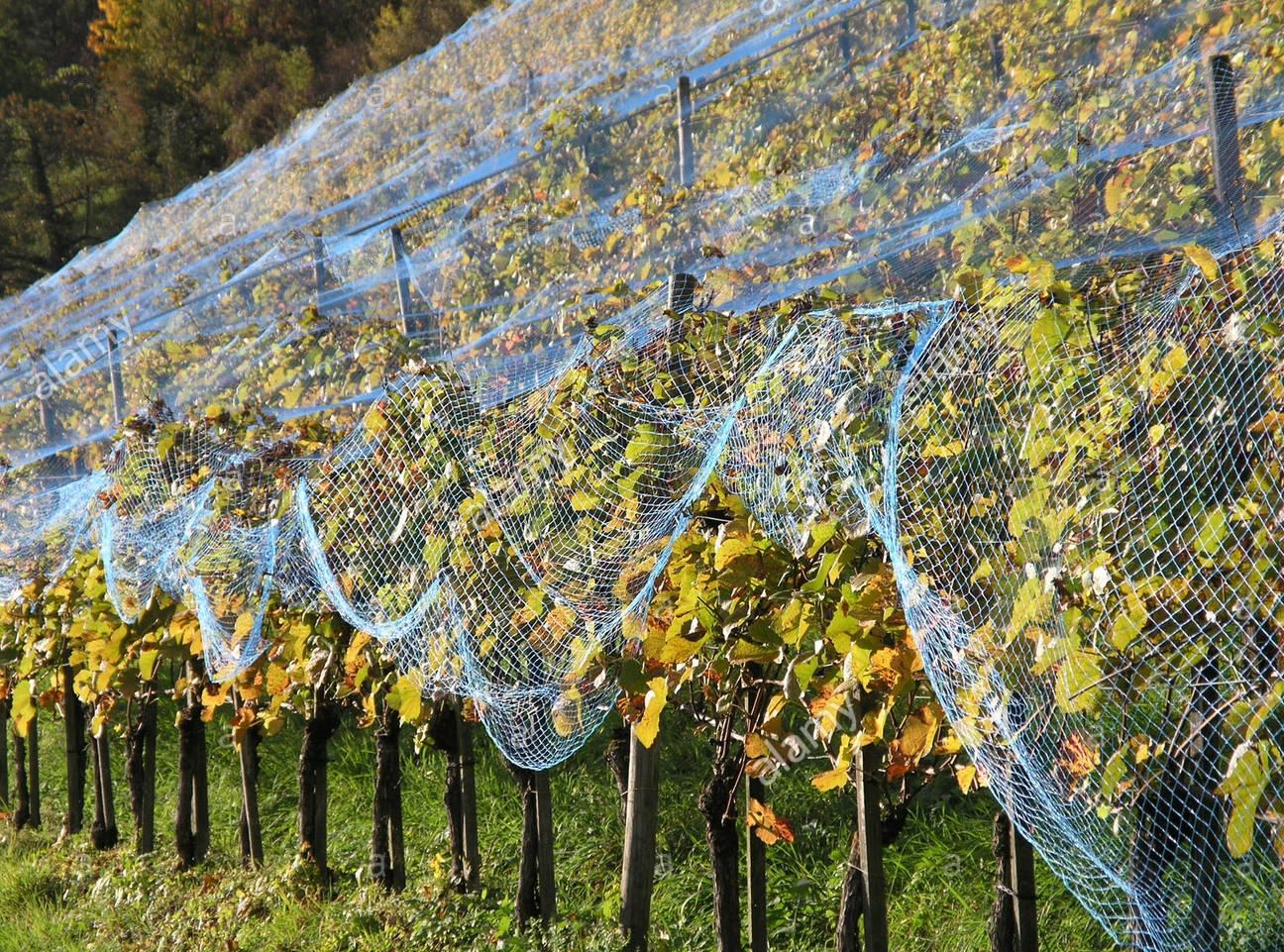 Konkurs za dodelu bespovratnih sredstava za sufinansiranje nabavke opreme za zaštitu od vremenskih nepogoda i elemenata potrebnih za podizanje voćarskih i vinogradarskih zasada