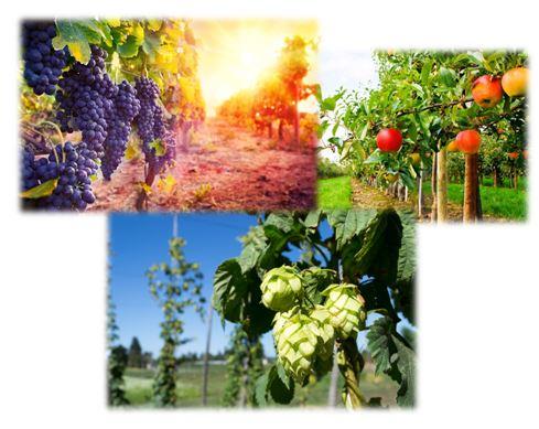Konkurs za programe sertifikacije sadnog materijala i klonsku selekciju voćaka, vinove loze i hmelja za 2017. godinu